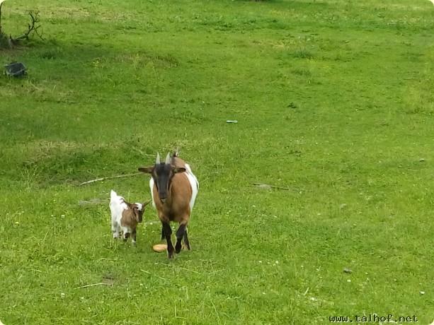 Spaziergang mit der Mama