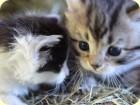 Unsere ersten zwei süßen Kätzchen dieses Jahr!