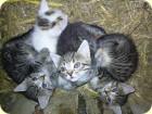 Süße Katzenbabys am Talhof