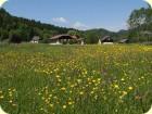Blühende Sommerwiesen