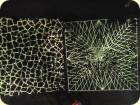 Spinnennetze in 3D man konnte sich darin verlaufen.